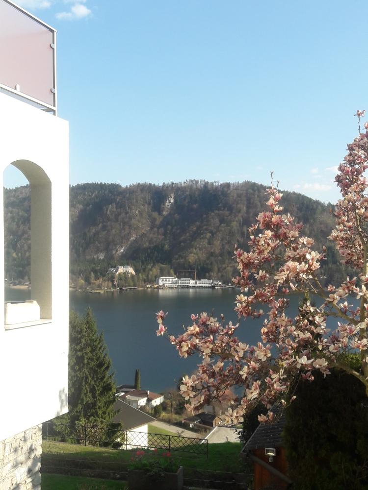 Fühlingsimpression mit Blick auf den See und Magnolienbaum